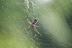 spiderviolin