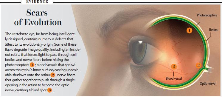Evolution of the Eye, Trevor D. Lamb